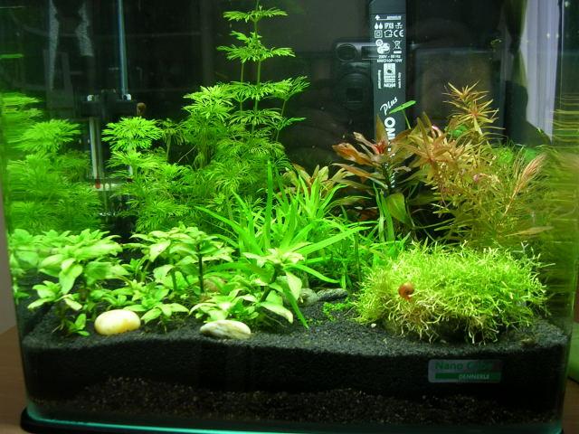 Nanocube de cathsem 20l for Filtre aquarium 20l