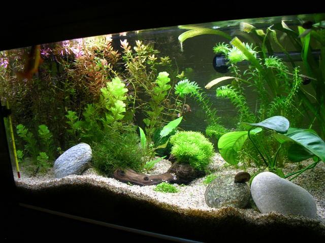 Aquarium 54 litres for Racine aquarium