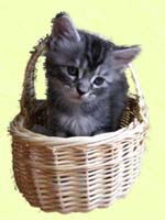 Kitty_basket